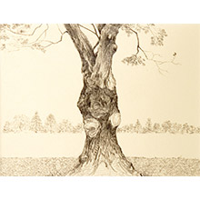 'Portrait of an Oak Tree (2)'